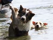 Dogs Being Rescued from Floodwater